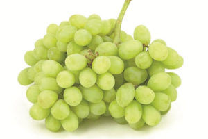 Western Pacific Produce Autumn King Grapes