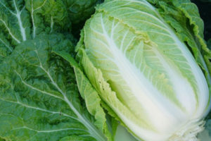 Western Pacific Produce Napa Cabbage