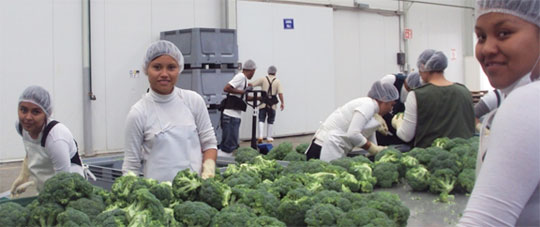 Food Safety at Fresh Cooling Plant, Mexico