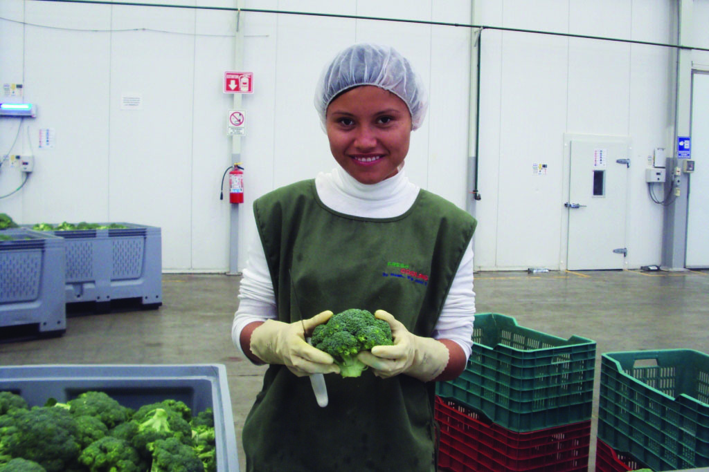 Our Process, Growing and Processing Broccoli from Mexico