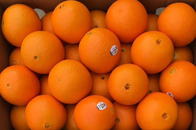 Oranges for Export -Western Pacific Produce